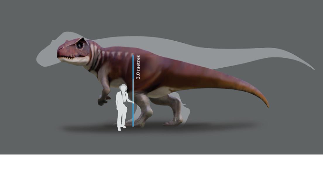 Un estudio revela que gigantescos dinosaurios carnívoros habitaron Australia durante el Jurásico