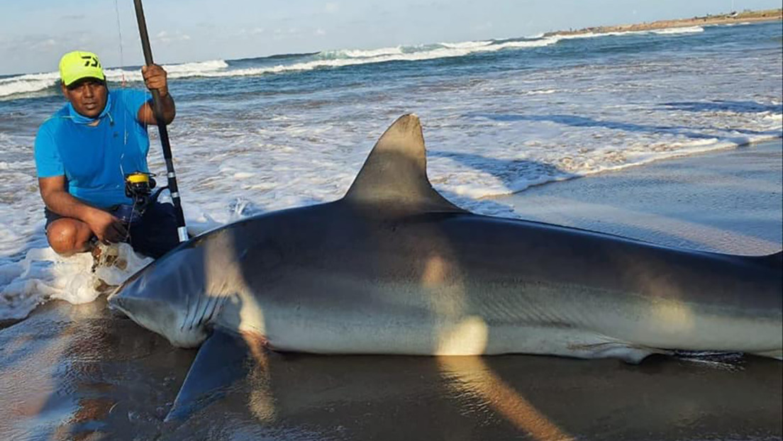 Captura un tiburón de casi 300 kilos de peso con una pequeña sardina como cebo thumbnail