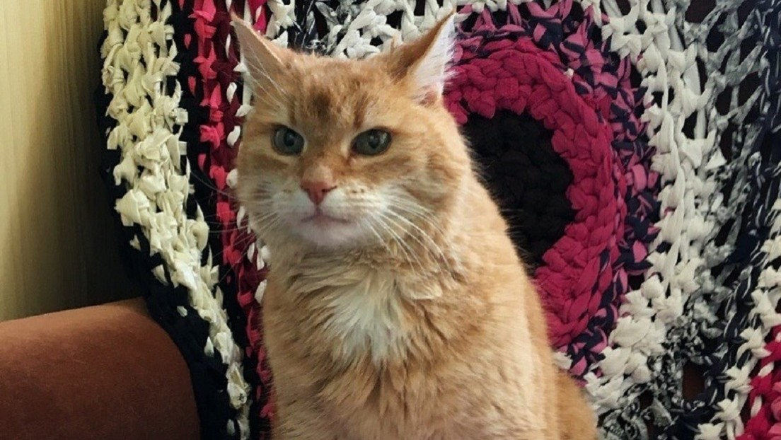 Un gato vuelve a casa tres años después de una aventura