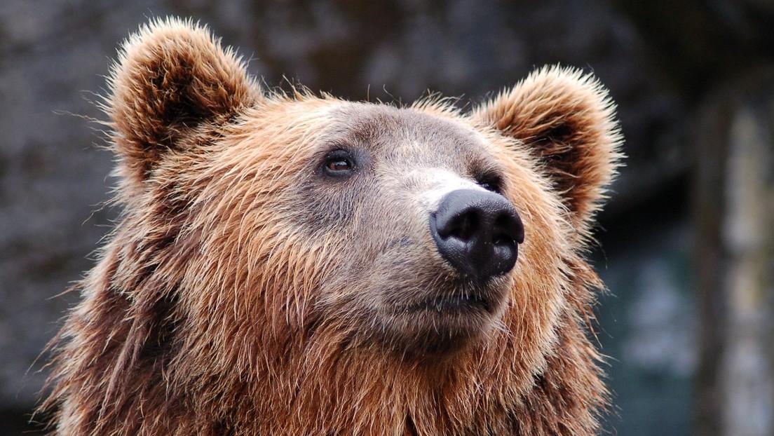 Jugador de la NFL es sorprendido por dos osos en su casa