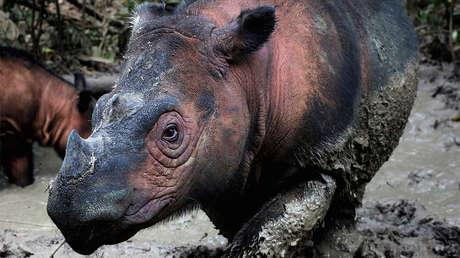 La sexta extinción masiva ya está en marcha