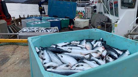 China apunta al salmón de Europa como origen del rebrote de coronavirus en Pekín