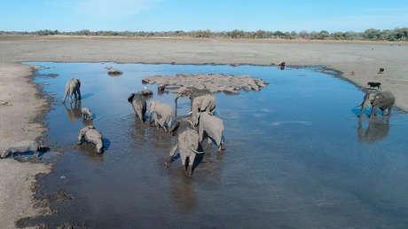 Crece el número de elefantes muertos hallados intactos en Botsuana y nadie sabe por qué