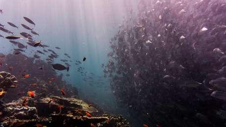 La contaminación humana por mercurio llega al lugar más profundo de los océanos del planeta