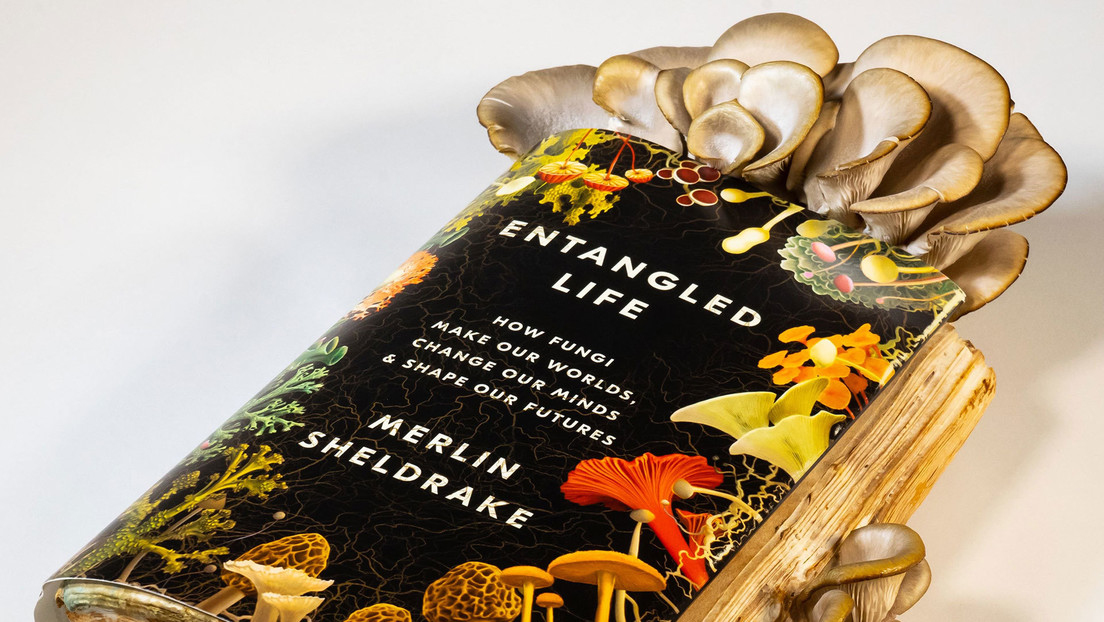 VIDEO: Un biólogo cultiva setas en su libro sobre hongos y se las come