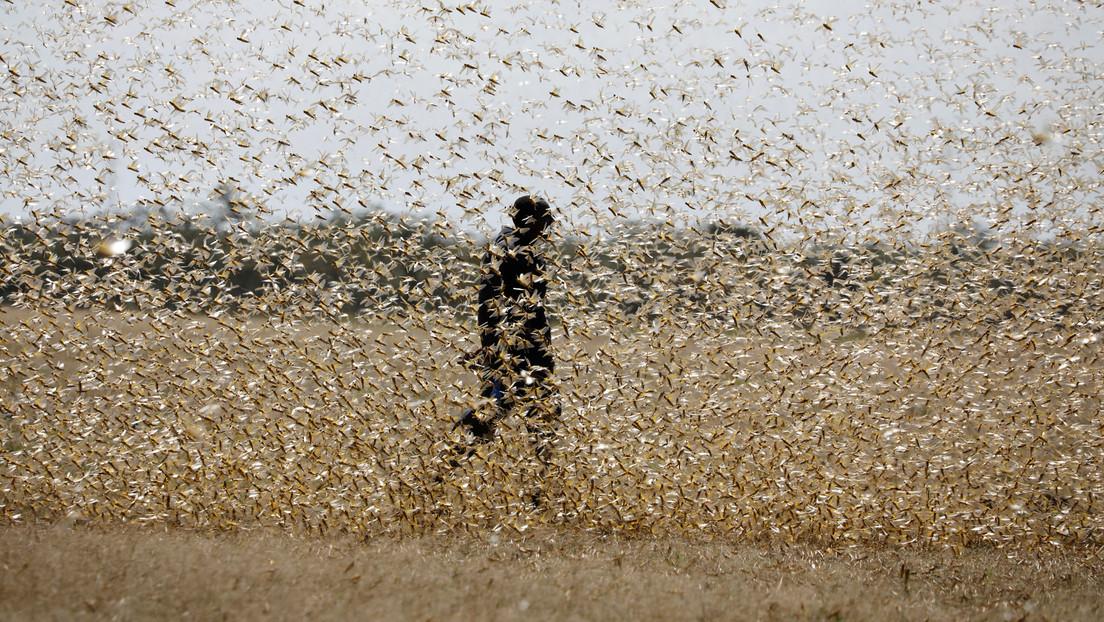 """Por """"aterradora y dramática"""" que sea, la plaga de langostas en África Oriental nos trae """"un mensaje más profundo"""", según un experto"""
