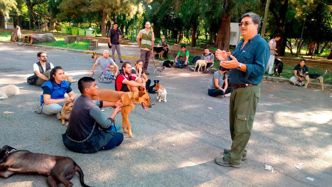 ¿Puede un perro detectar covid-19 a través del olfato?: La Universidad de Buenos Aires se suma al proyecto que busca demostrarlo