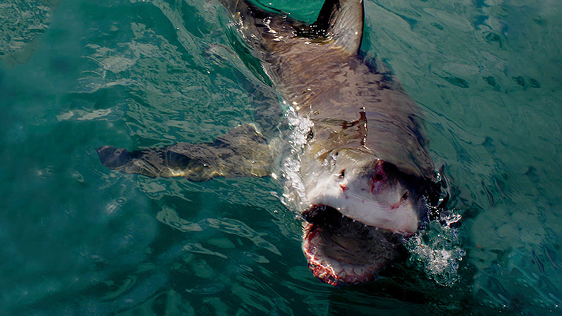 Un pescador escapa de las fauces de un tiburón y muere en los brazos de su hermano