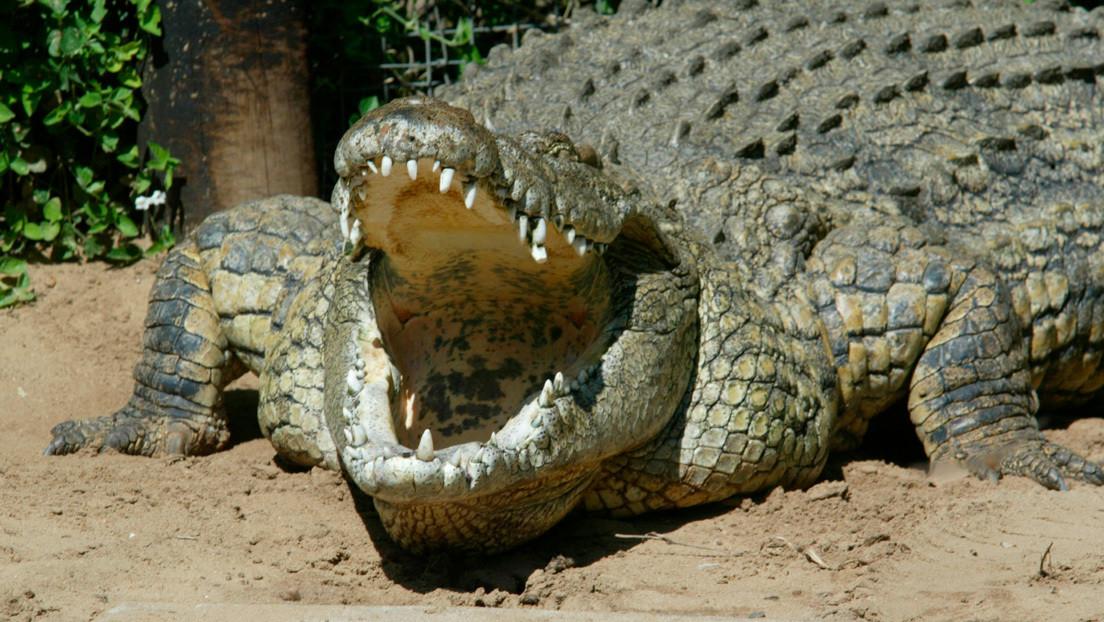 Atrapan en la India a un cocodrilo que mató a siete personas en siete años