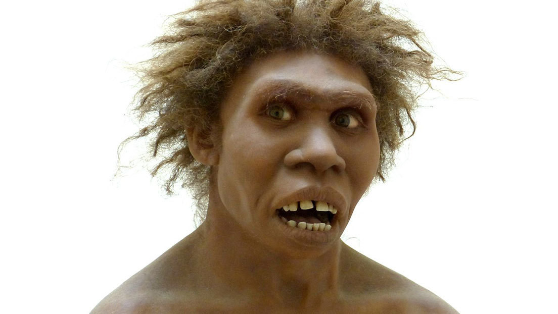 """El 'Homo erectus' no era tan esbelto como se pensaba y tenía un pecho """"ancho y profundo"""" como los neandertales"""