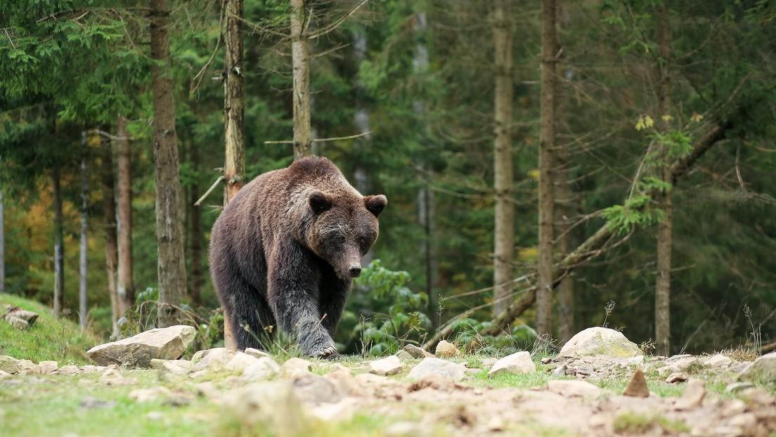 VIDEO: Una mujer se acerca a un oso salvaje para hacerse una 'selfi' (pero no salió como esperaba)
