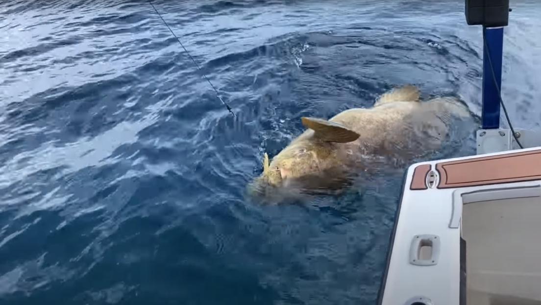 VIDEO: Un mero gigante tira por la borda a dos pescadores