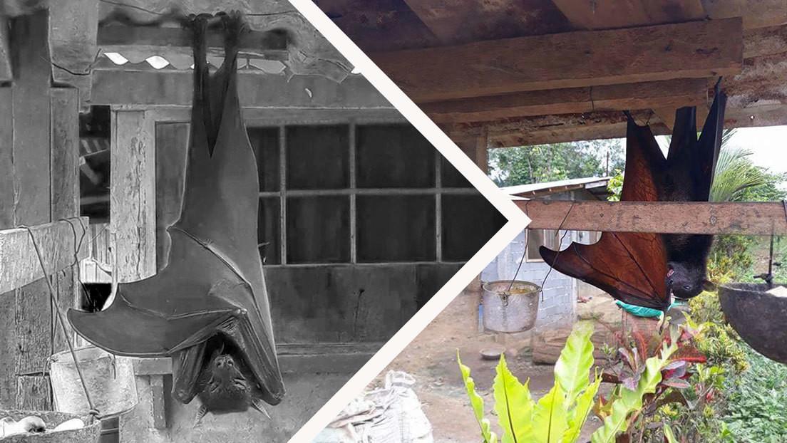 """La foto del murciélago """"de tamaño humano"""" que circula por la Red es real... pero tiene truco"""