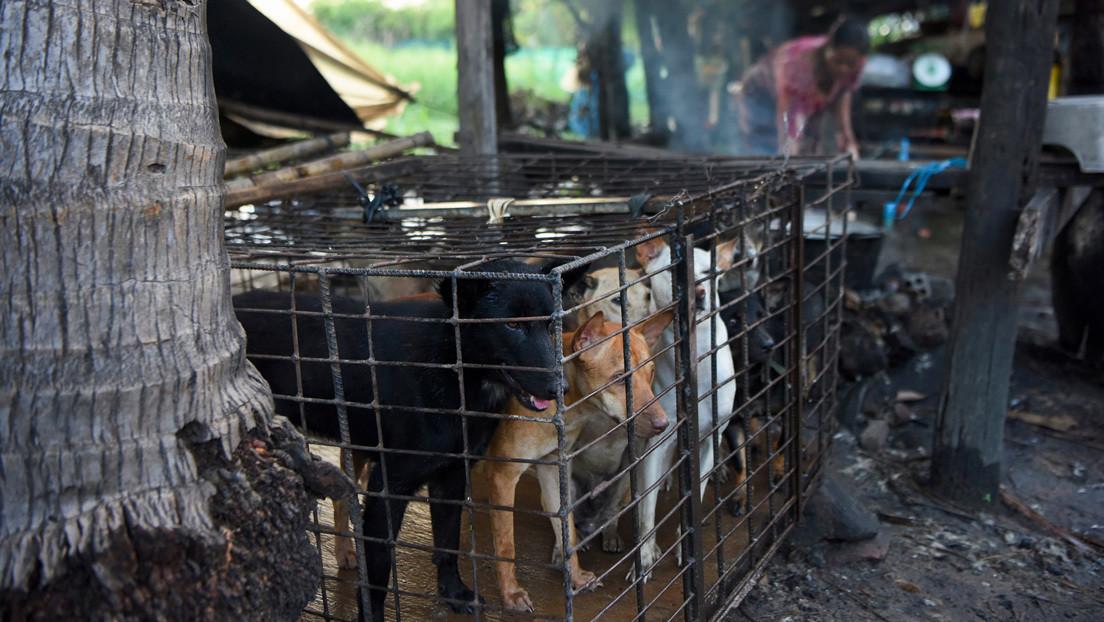 Prohíben el comercio de carne de perro en una provincia turística de Camboya