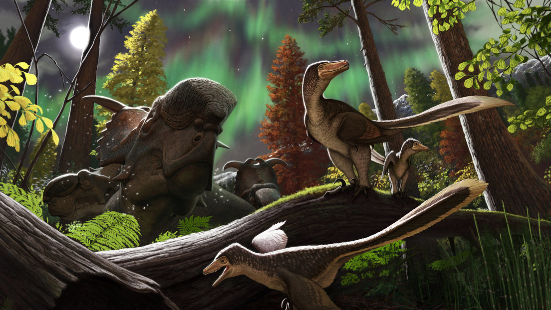 Descubren en Alaska los restos fosilizados de una cría de dinosaurio