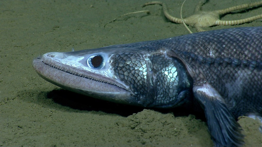 Los dientes humanos evolucionaron hace 400 millones de años a partir de un extraño pez con mandíbula, según un estudio