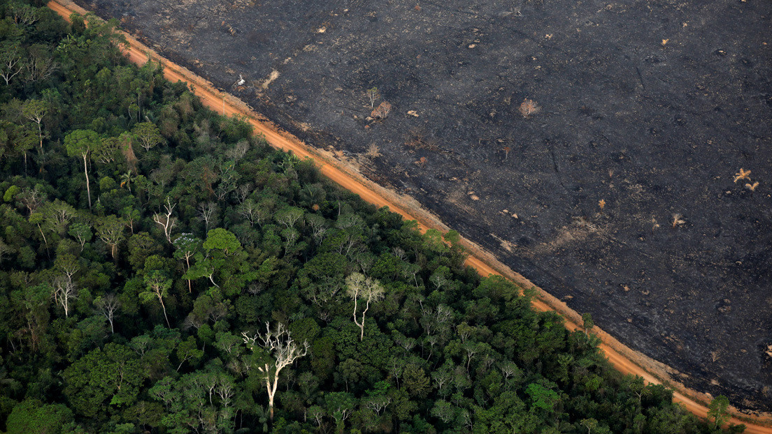 La Amazonía brasileña bate un nuevo récord de alertas de deforestación en junio