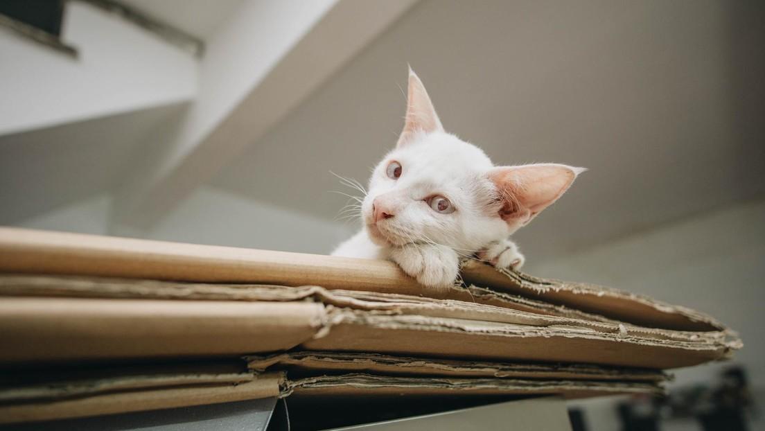 """""""Habría votado por un partido calificado"""": Un gato que murió hace 12 años recibe una invitación a votar en EE.UU."""