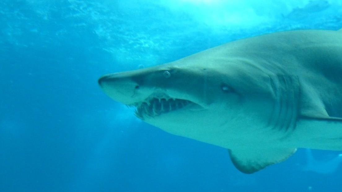 Un tiburón blanco mata a un adolescente de 15 años delante de sus padres y amigos