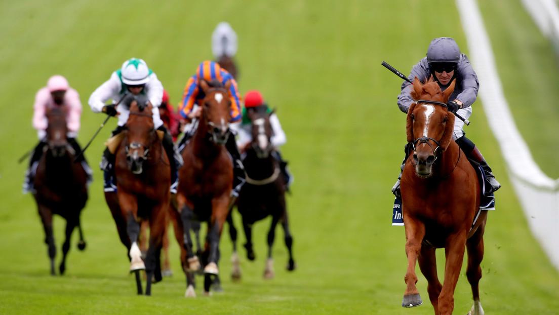 VIDEO: Un caballo encabeza una carrera, pero justo antes del final cambia de opinión y hace esto