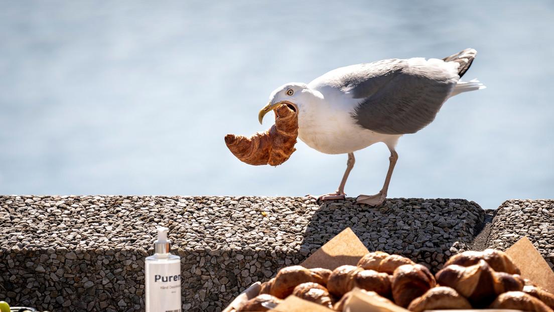 Muerde a una gaviota que trató de robarle su almuerzo de McDonald's