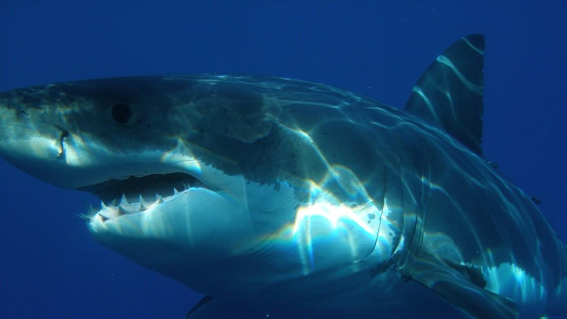 Captan momento en que tiburón blanco embiste bote