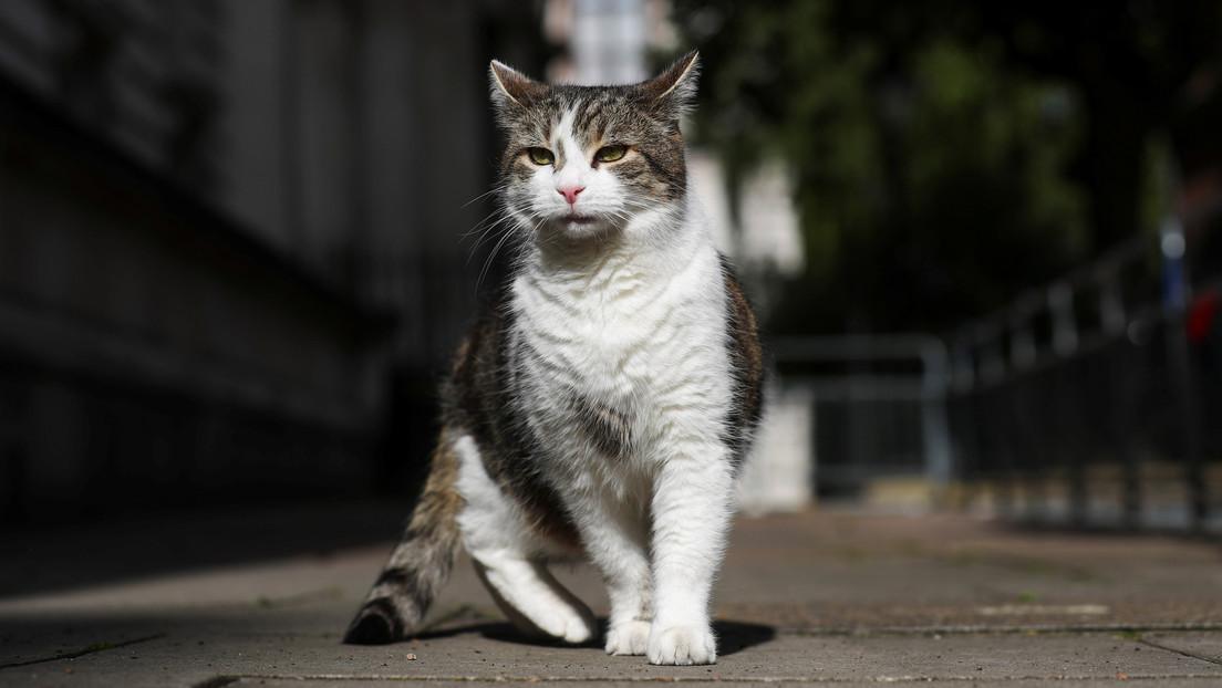 Un estudio revela las primeras evidencias de la domesticación del gato en Europa central