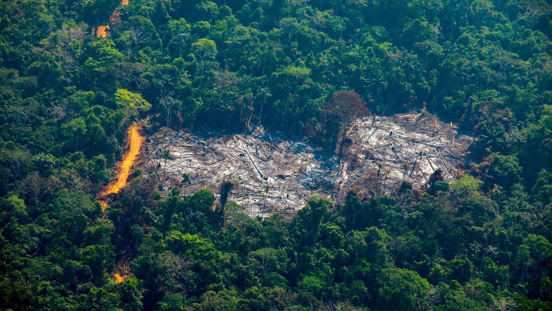 """El Gobierno brasileño dice que reducirá """"a un mínimo aceptable"""" la deforestación y los incendios en la Amazonía thumbnail"""