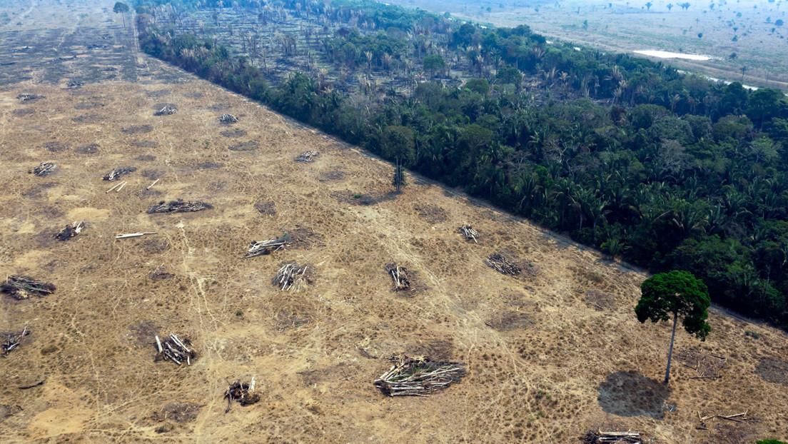 Un 20 % de la soja y 17 % la carne vacuna exportadas de Brasil a la UE están ligadas a la deforestación ilegal