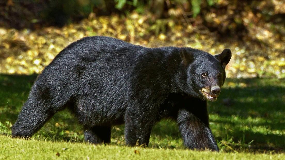 """Una joven sufre el ataque de un oso que le dejó cicatrices en la cara y espalda """"en un par de segundos"""" thumbnail"""