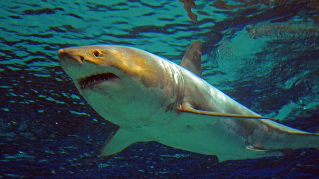 Un tiburón salta del agua, ataca a un niño en un bote y se lo lleva al mar