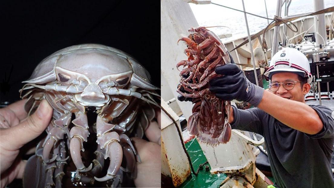 """Encuentran una nueva especie de cucaracha marina """"supergigante"""" parecida a Darth Vader"""