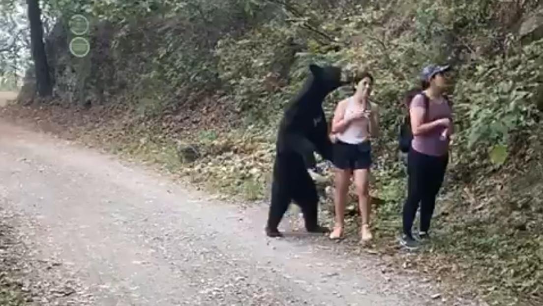 VIDEOS: Un oso negro 'abraza' a una mexicana, pero esta mantiene la calma y hasta logra tomarse un selfi