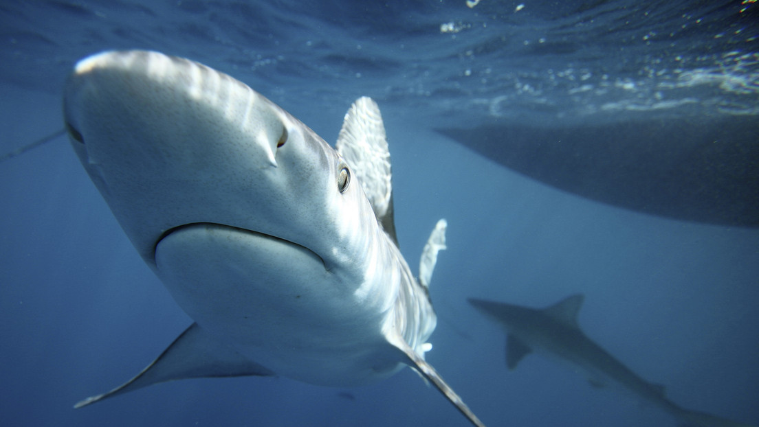 Policía salva a niño de ser devorado por tiburón (VIDEO VIRAL)