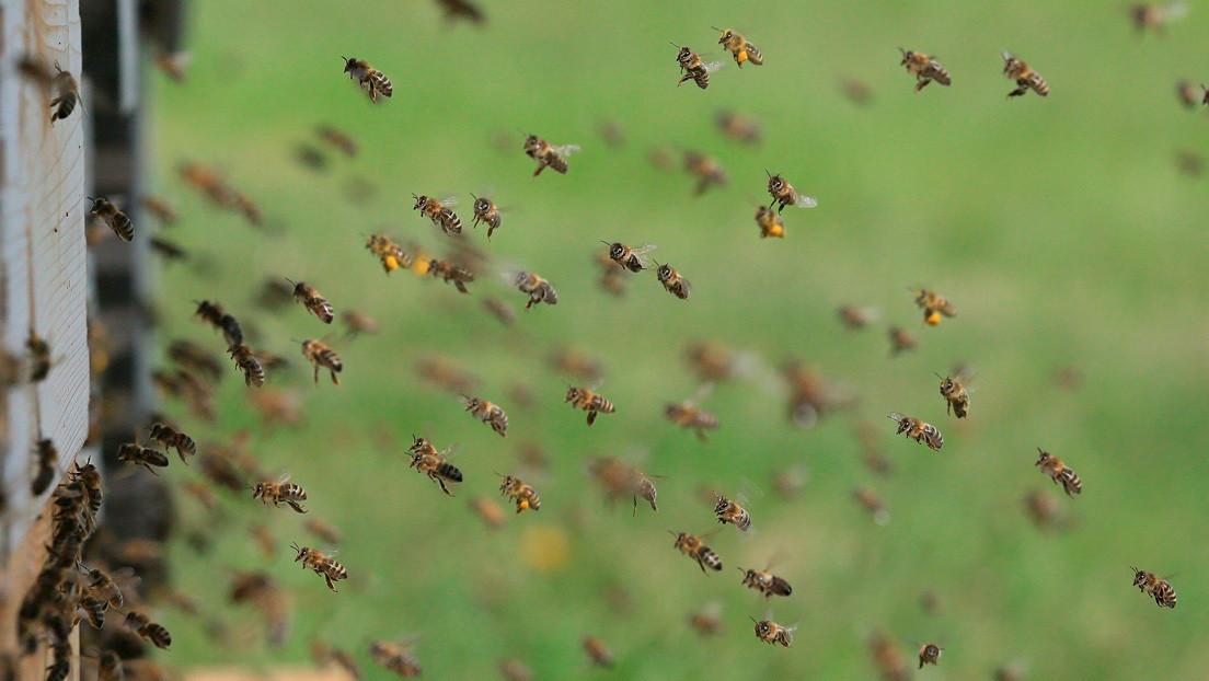 Miles de abejas invaden una playa en EE.UU. (VIDEO)