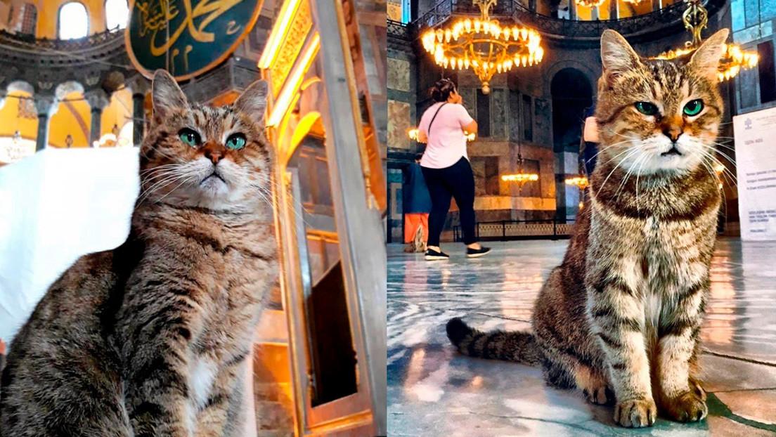 La famosa gata de la basílica de Santa Sofía seguirá viviendo en el templo pese al cambio a mezquita