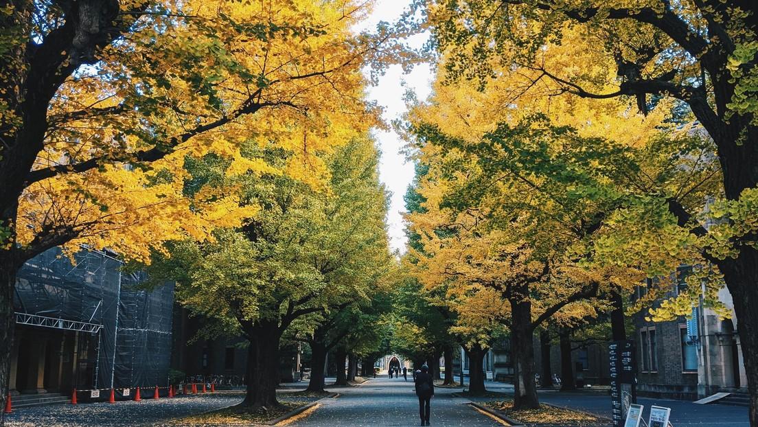 Un nuevo estudio descarta que los árboles milenarios sean inmortales y revela los secretos de su larga vida