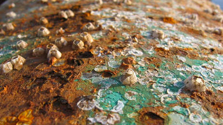 Científicos estadounidenses descubren 'accidentalmente' dos bacterias que comen metales