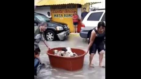 Una pareja mexicana rescata con una tina perros en las calles inundadas y se hace viral (VIDEO)