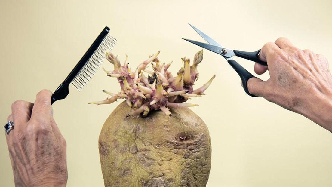 FOTOS: Se otorga el primer premio a la fotografía de patatas (y gana una imagen relacionada a la pandemia)