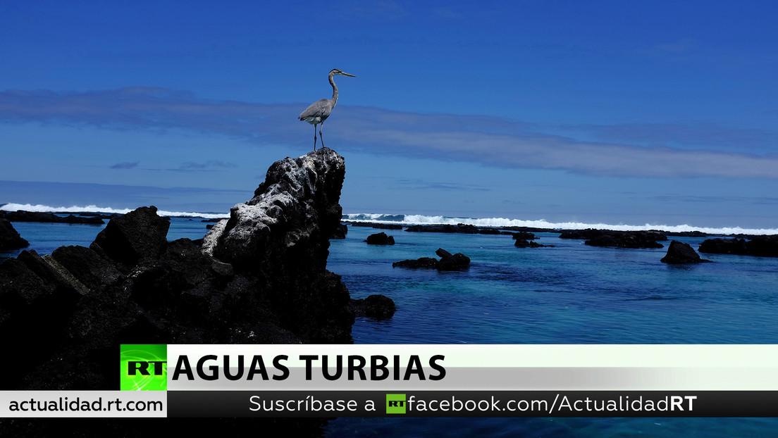 Ecuador protesta por la presencia de pesqueros chinos cerca de las Galápagos