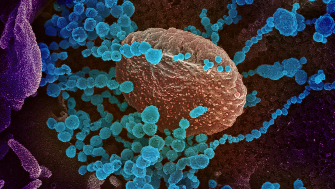 """Científicos revelan """"una de las cosas más extrañas del nuevo coronavirus"""""""