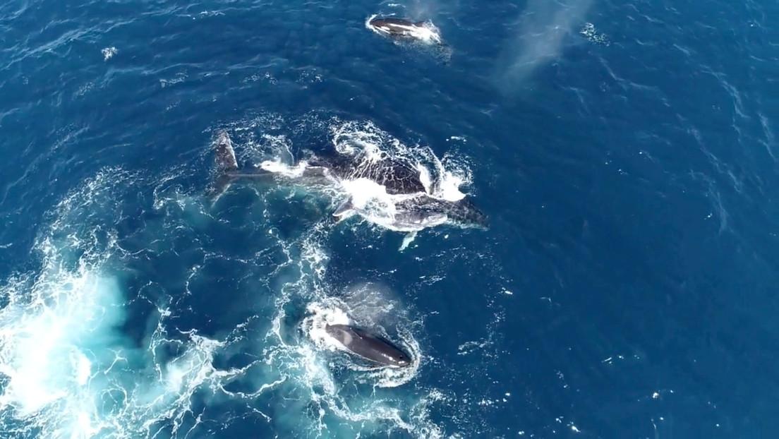 Una mujer sufre rotura de costillas y hemorragia interna tras ser aplastada entre dos ballenas