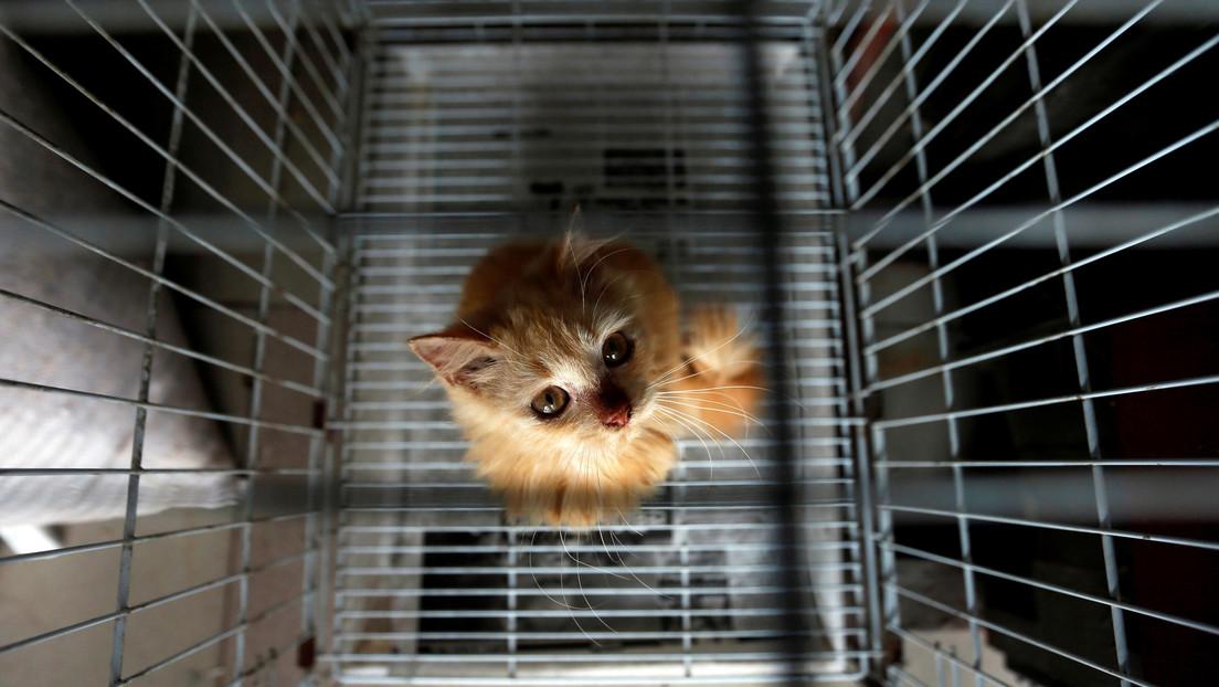 Un gato 'traficante de drogas' escapa de una prisión de máxima seguridad en Sri Lanka