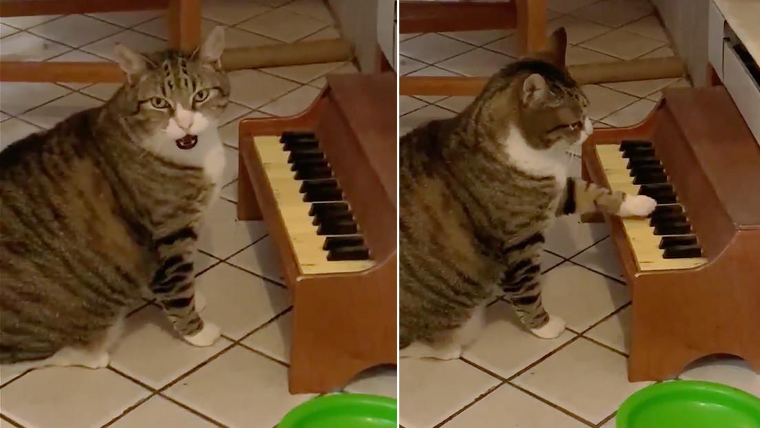Un gato puesto a dieta toca un minipiano para pedir comida (VIDEO)