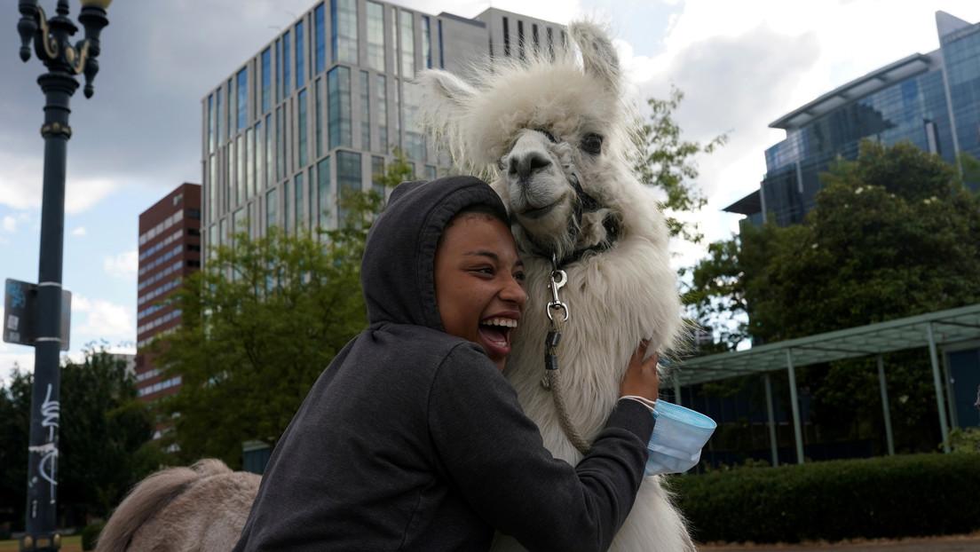 """La llama """"sin drama"""" lleva su toque zen a las protestas en Portland"""