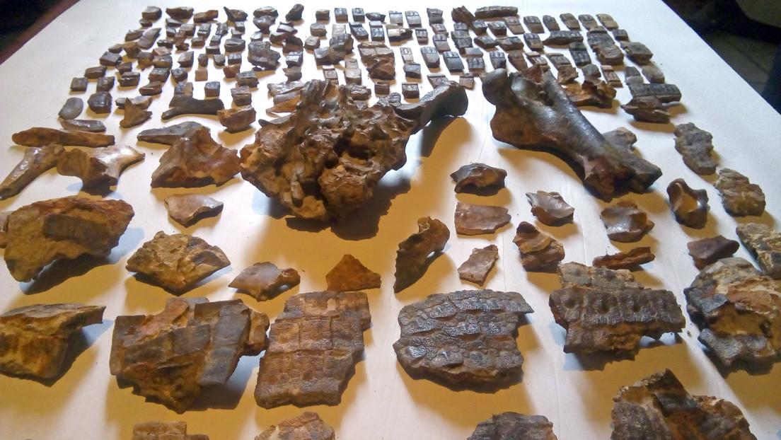 Hallan en Argentina restos fósiles de un armadillo de 700.000 años en el mismo sitio donde ocurrió la histórica 'Batalla de Obligado'