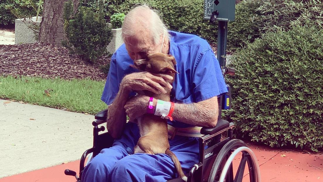 FOTOS: Un anciano de 86 años sufre un derrame cerebral y se salva gracias a su fiel chihuahua
