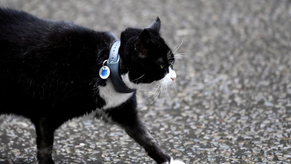 VIDEO: Cámaras captan el momento exacto en el que un gato aterriza sobre la cabeza de un anciano y lo deja inconsciente