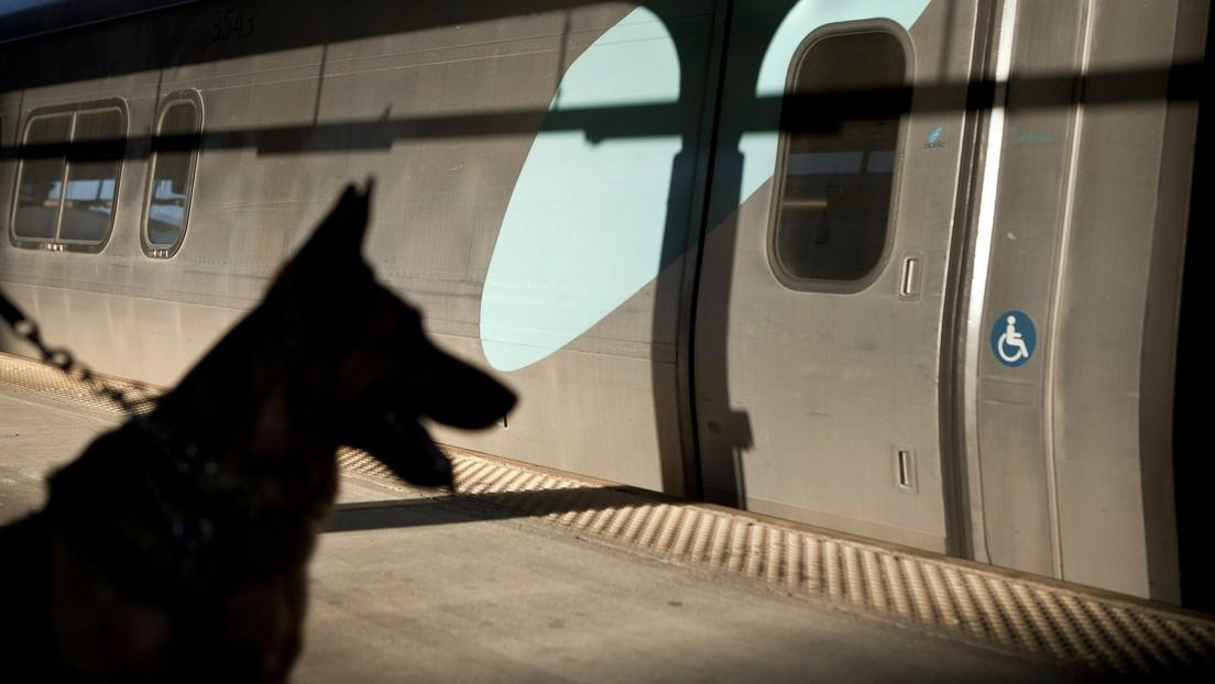 Dubái emplea perros policía para detectar covid-19 con una eficacia del 91 %